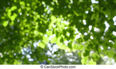 Defocused Nature Background - Defocused abstract fresh green...