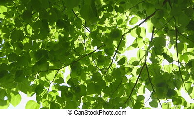 Fresh green Leaves with Sunbeams