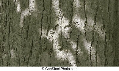 Shadows on a Tree Trunk - Nature - sunlight through tree...