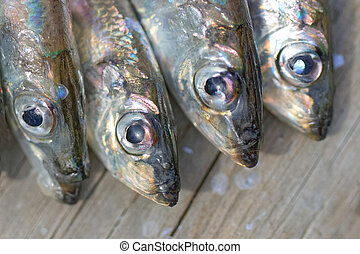 Four baltic herring - Group of four newly catch baltic...
