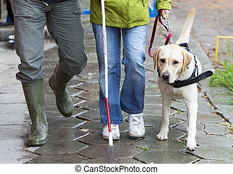 Blind person with her guide dog - A blind person is led by...