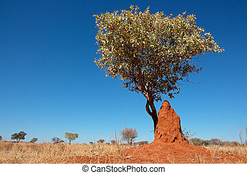 Tree and termite mound - Landscape with a tree and termite...