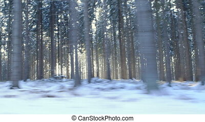 Winter Driving - Winter Forest