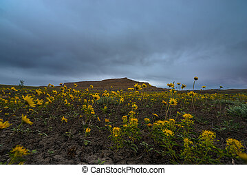 Yellow Flowers Cottonwood Canyon Road Utah Horizontal...