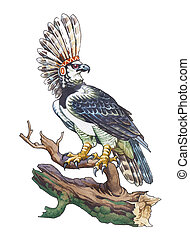 Harpy Eagle Harpia harpyja, sometimes known as the American...