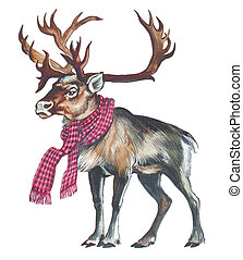 renne, (Caribou)