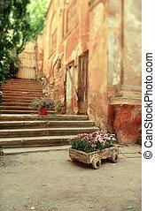 garden carnation - in a wooden cart, grow beautiful...