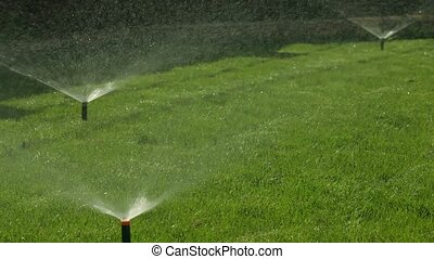 Automatic Watering Lawn