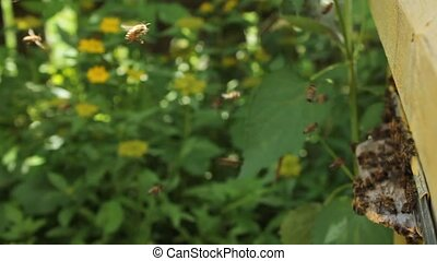 Evening flying bees - Interesting trajectory of bees to the...