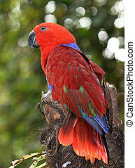 red parrot bird - a red parrot bird on a branch of a tree in...