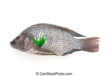 Raw fresh fish isolated on white background