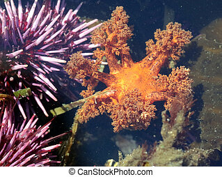 Tentacles of an Orange Sea Cucumber - Tentacles of the...