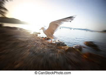 Seagull spreading wings at sunset - A zoom view of a seagull...