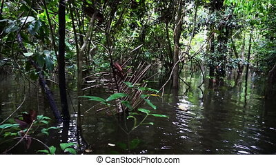 Jungle Passing By - Amazon rain forest passing by the camera...