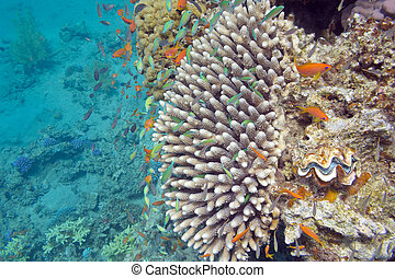 Coral reef with exotic fishes Anthias and Green chromis,...
