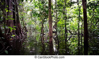 Passing through the Jungle - Passing through dense flooded...