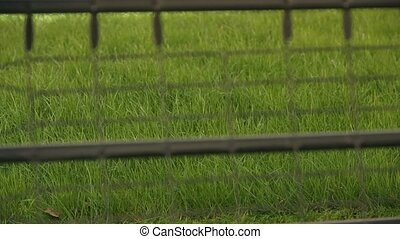 A Man Mows A green Lawn Mower. - Through the fence in the...