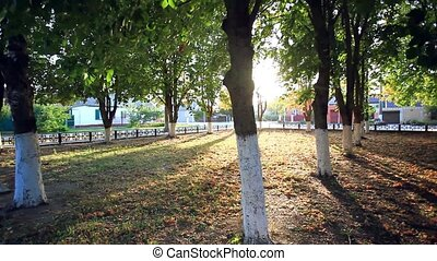 Sunny park afternoon Suns rays shine through the trees HD...