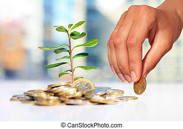 Successful investment Plant and coins on table