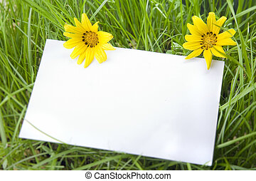 White sign amongst grass with daisies - background, blank,...