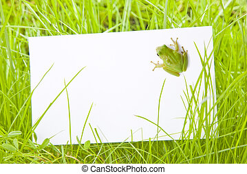 White Sign Amongst Grass with Tree Frog - White Sign Amongst...
