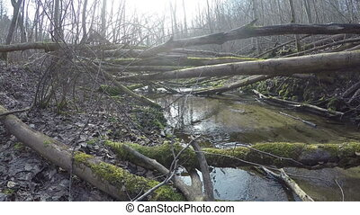 wild brook in forest - Many fallen mossy tree trunks on...
