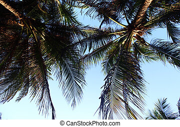 palm in blue sky - palm green foliage in blue sky