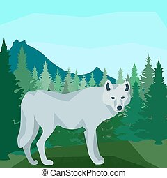 Wolf in the coniferous forest, animals and nature