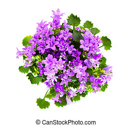 Beautiful vivid purple spring flower bush Dalmatian...