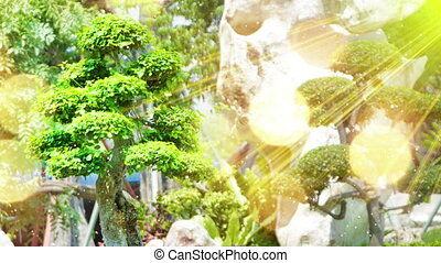 bonsai tree in garden and sunrays seamless loop