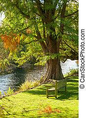 Park bench near a stream