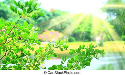 green leaves and sunrays slowmotion seamless loop