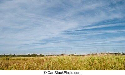 Rural Landscape. timelapse.