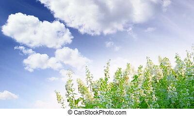 flowers over cloudy sky timelapse
