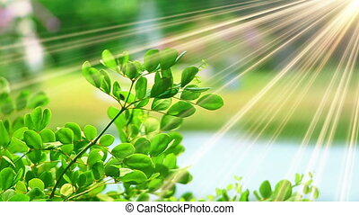 green leaves and sunrays close-up