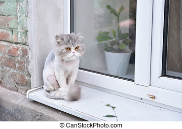 Cat with summer haircut