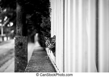 Abandoned cat outdoors - An Abandoned cat outdoors looking...