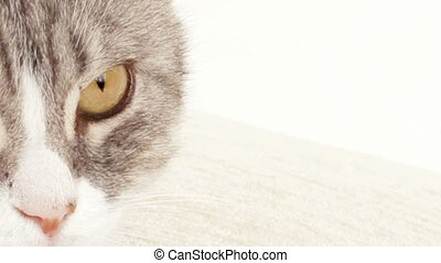 Cats Eyes - View of the noble cat.
