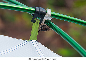 Gross spider on tent camping sticks, Florianopolis, Brazil.