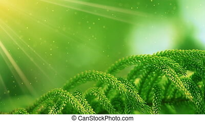 branch of conifer tree close-up and sunrays