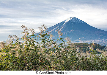 Mount Fuji and reed - Autumn thin snow pilled on the Mount...