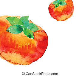 tomato - watercolor drawing of sweet tomato in a white...