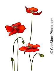 flower - drawing of red flower in a white background