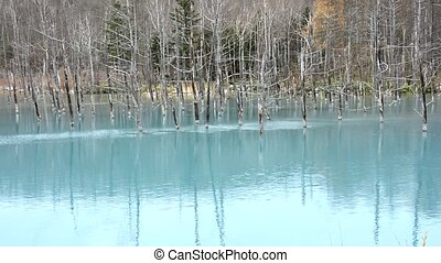 Blue pond and dead trees - Late autumn of blue pond and dead...