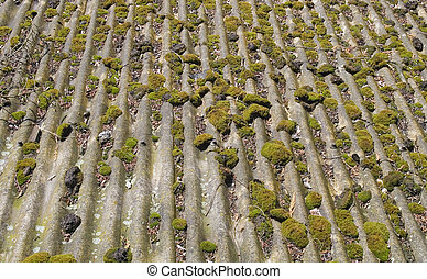 Moss growing on old roof - Old, weathered asbestos roof -...