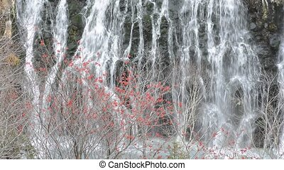 Red rowan berrys in front of waterfall