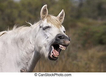 Funny horse  - Funny grey horse laughing in the camera