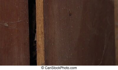 cobwebs behind the door of the cabin - very very dirty...
