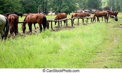 groups of horses