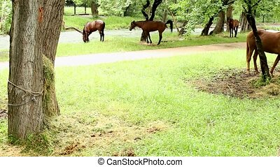 horse defecates in the park